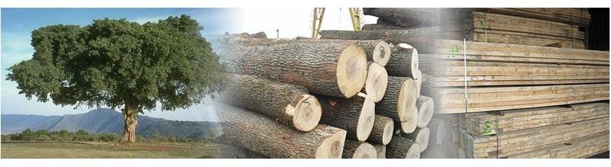 Tablón y tronco